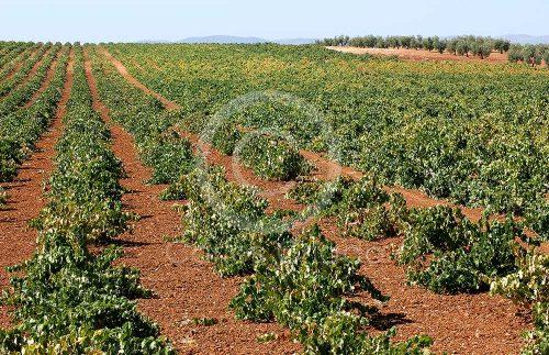Sierra Grande Tierra de Barros